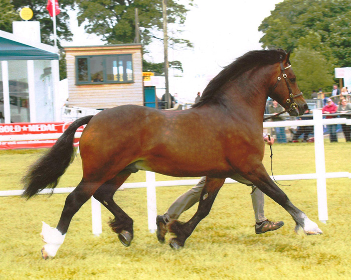 breeding with international horse breeders
