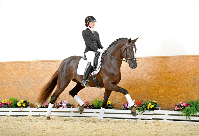 breed with international horse breeders