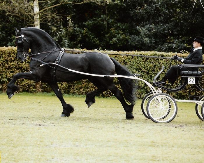 harmen stallion