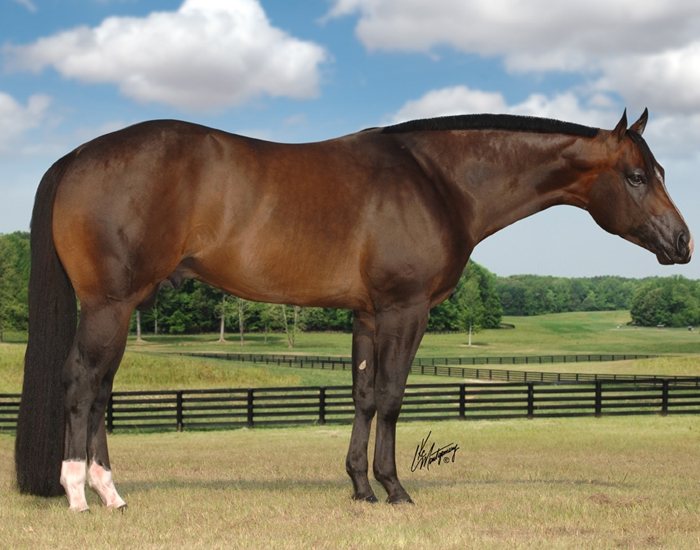 breed quarter horse