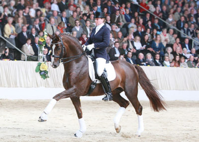 Belissimo M warmblood stallion