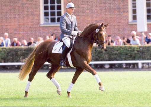 londontime stallion