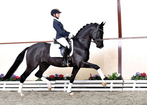 tailormade top gear stallion