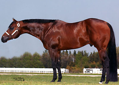 zippos after shock quarter horse stallion