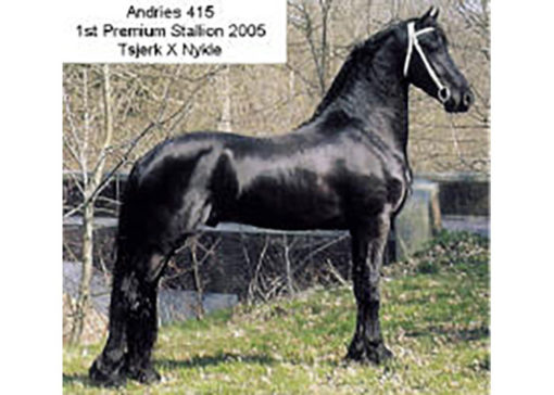 andries friesian stallion