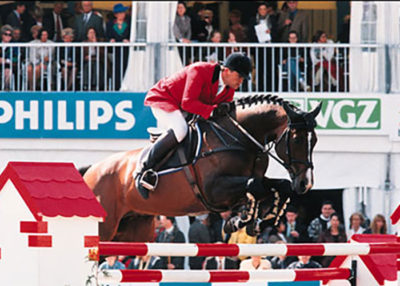 damiro warmblood stallion holland