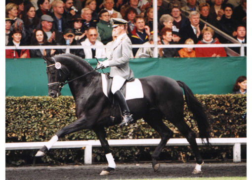 don frederico stallion