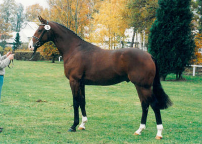 longchamp stallion
