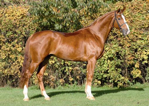 loxley 11 stallion