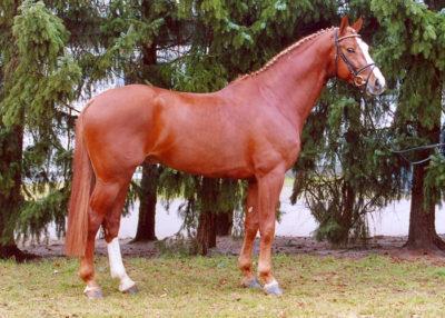 valentino stallion