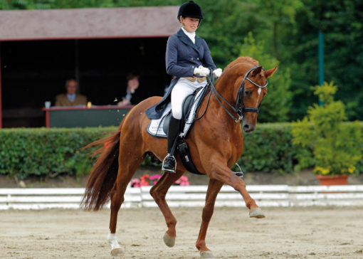 le-rouge-warmblood stallion