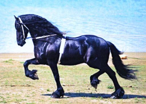 feits 293 stallion