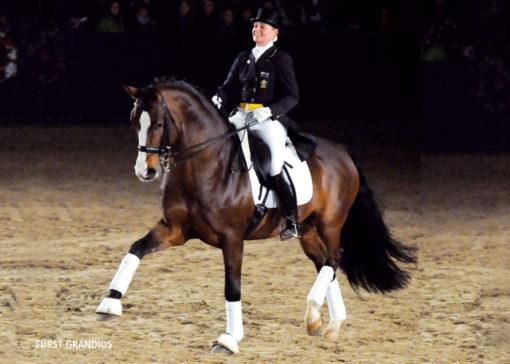 furst grandious stallion