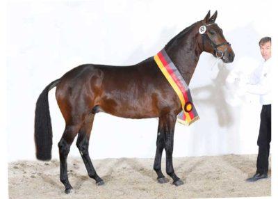 Grand Passion stallion