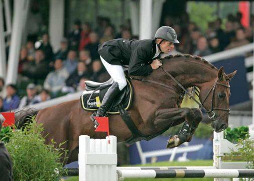 Armitage warmblood stallion