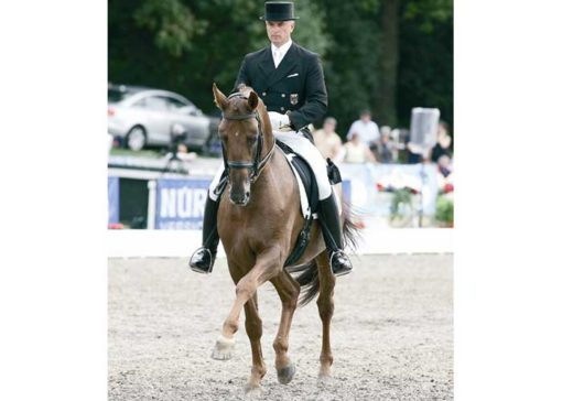 breitling warmblood stallion