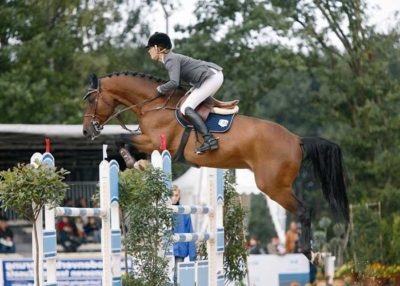 Centadel warmblood stallion