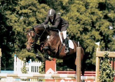 Colander stallion