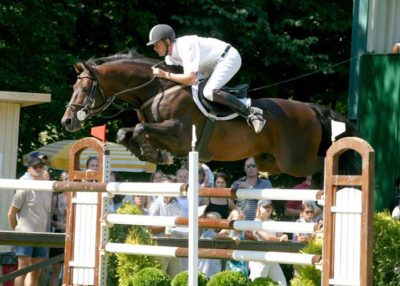 Condios warmblood stallion