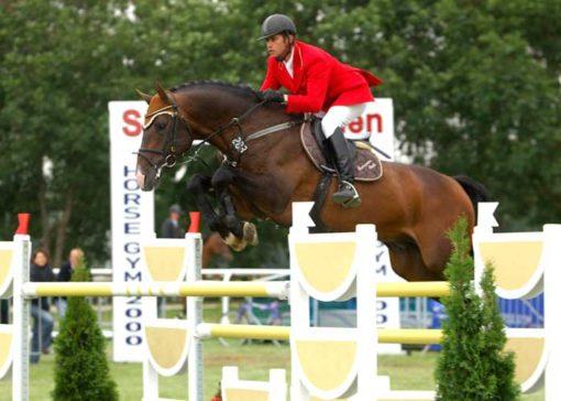 Corofino 11 warmblood stallion