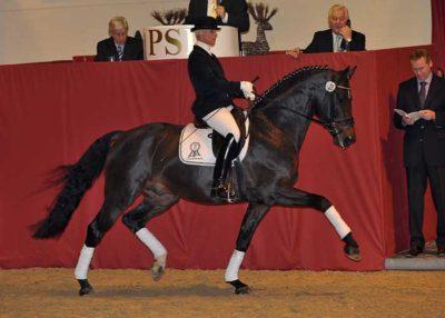 Diamonit stallion