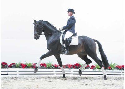 Don Primus stallion