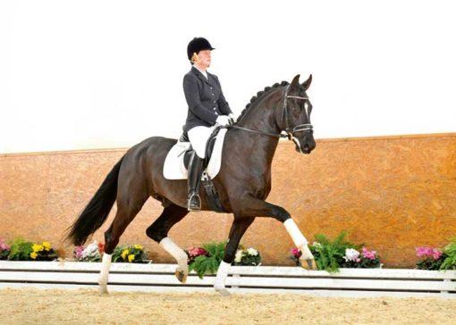 Dragon Hill stallion