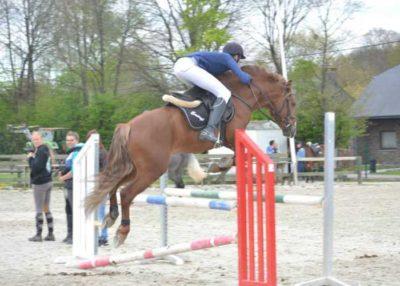 Emeryt Misbour connemaras stallion