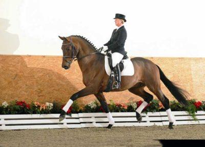 L'Espoir warmblood stallion