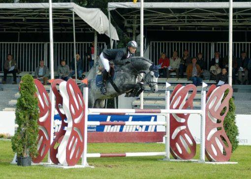 Linton stallion
