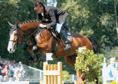 Lord Pezi warmblood stallion