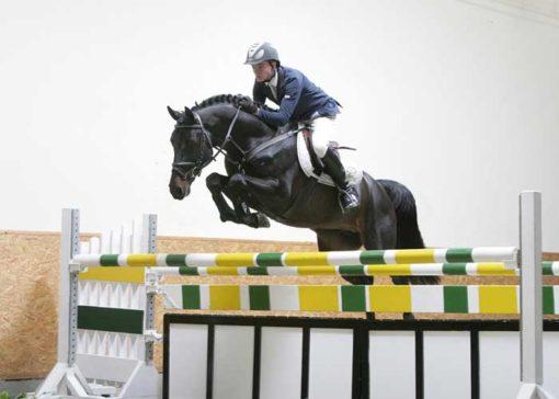 Nintender stallion