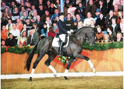 San Amour warmblood stallion