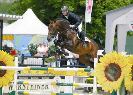 Sandro Boy warmblood stallion