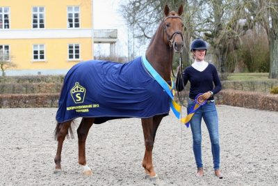 armani code warmblood