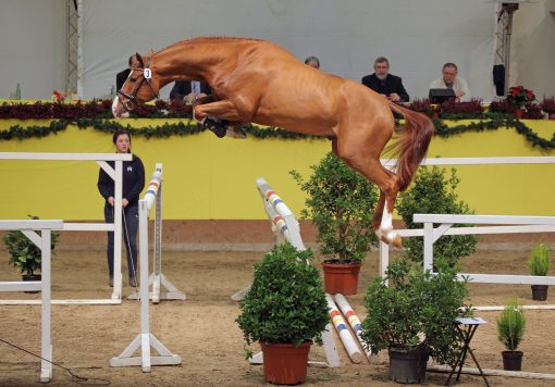 armicore warmblood