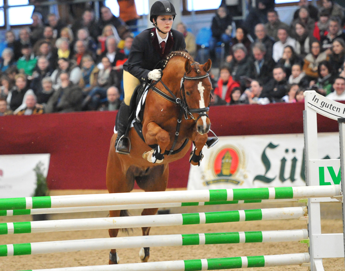 breed german riding pony