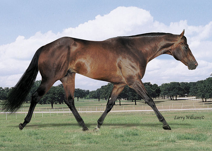 natural iron quarter horse stallion
