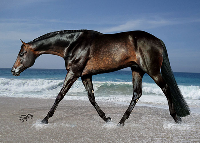 these irons are hot quarter horse stallion