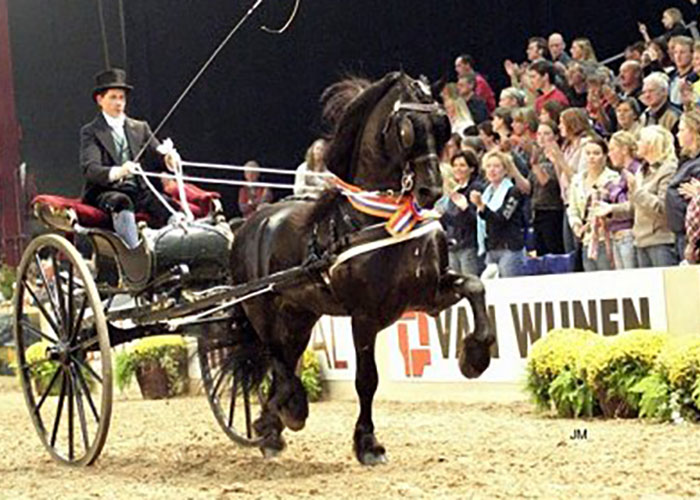 onne 376 friesian stallion