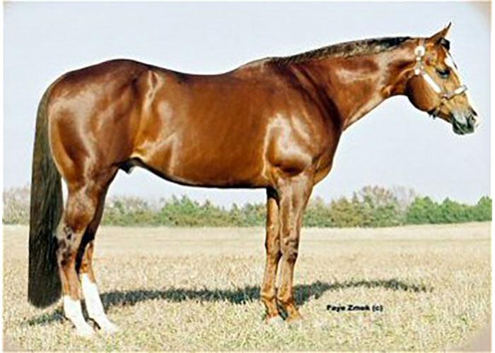 pine interest quater horse stallion