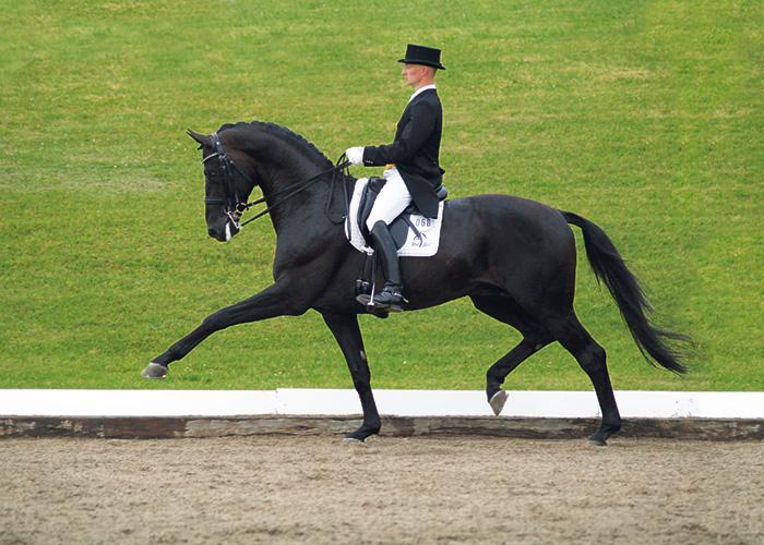 hotline stallion