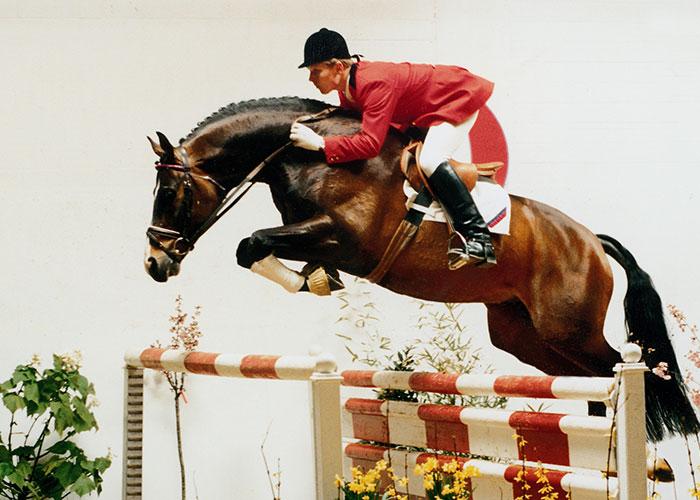 silvio warmblood stallion