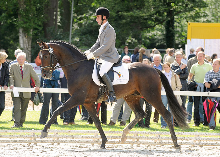 sir donnerhall stallion