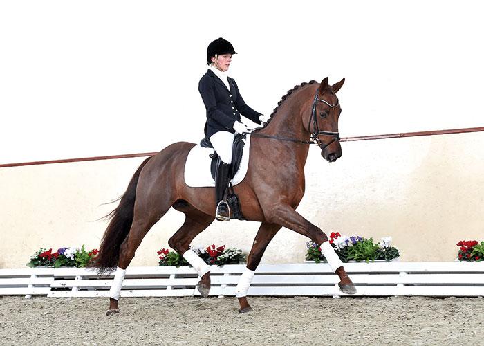 Vilancio stallion