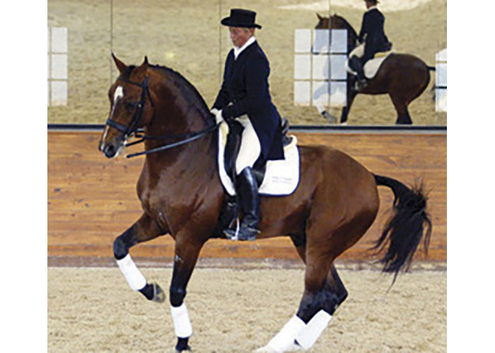bergamon warmblood stallion