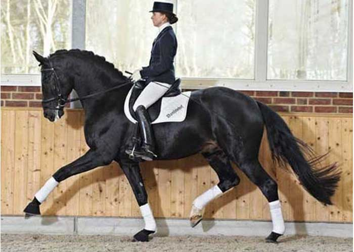 Delatio stallion
