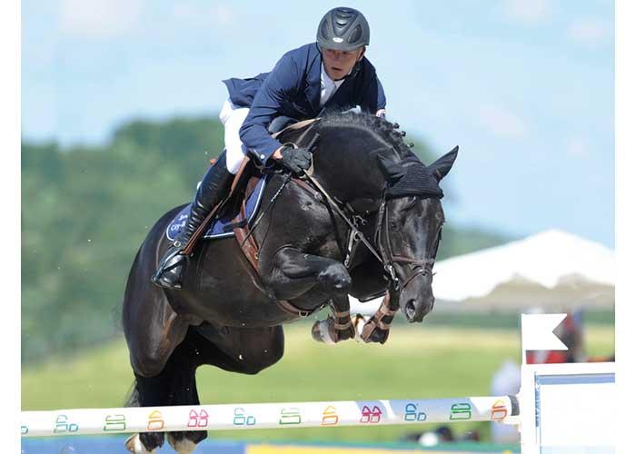 Diarado stallion