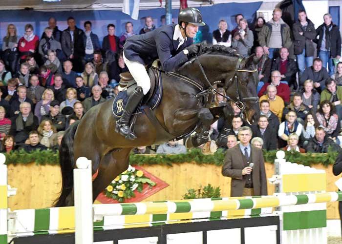 Diatendro warmblood stallion