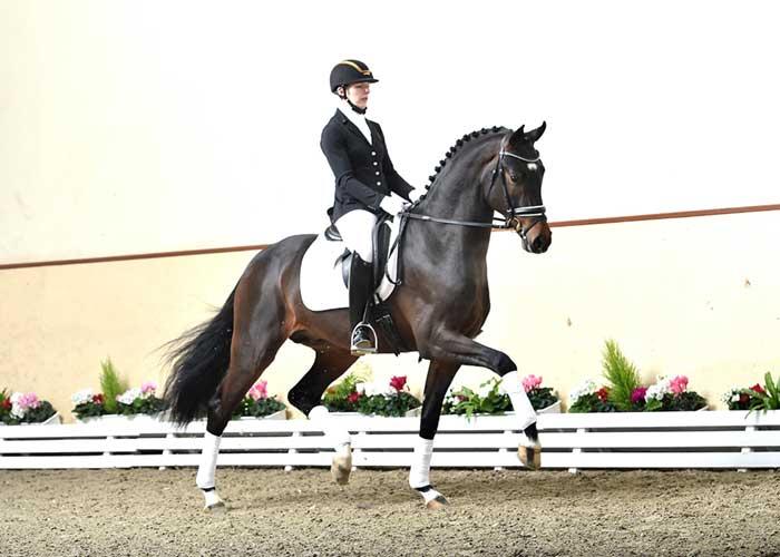 For Romance 11 stallion